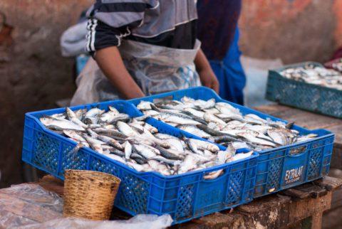 Pesce in vendita - Souk di Marrakech