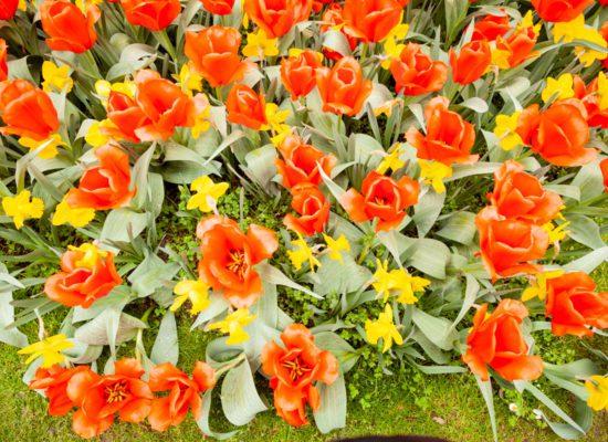 Flower at Parco Giardino Sigurtà